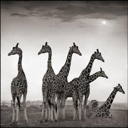 Nick Brandt, 'Giraffe Fan', 2000