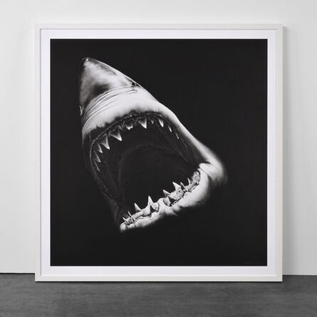 Robert Longo, 'Big Shark', 2010