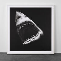 Robert Longo, 'Big Shark', 2010