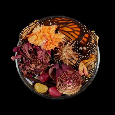 Suzanne Anker, 'Vanitas (in a Petri dish) #53', 2016