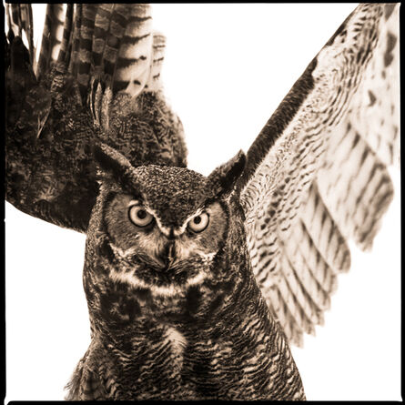 Nine Francois, 'Owl-IV', 2018