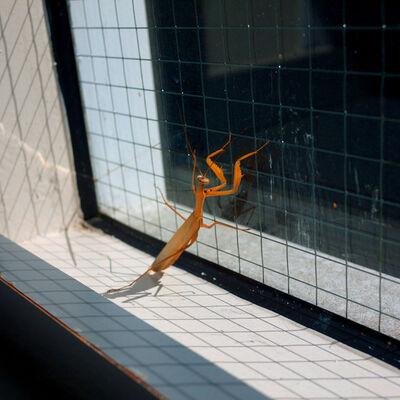 Hiroshi Watanabe, 'TDTDC 66 (Praying Mantis)', 2010