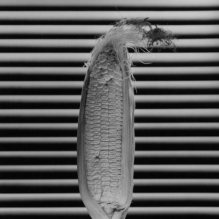 Robert Mapplethorpe, 'Corn', 1985