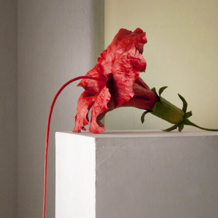 Sunil Gawde, 'A Rush of Blood to the Head', 2012