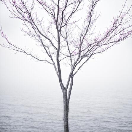 Cig Harvey, 'Spring Tree in Fog, Lincolnville, Maine', 2012