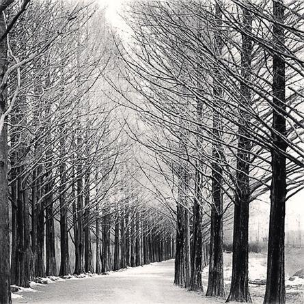 Michael Kenna, 'Alley of Trees, Damyang, Jeollanamdo, South Korea', 2012