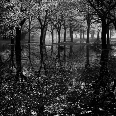 Toshio Enomoto, '016 - Cherry tree woods in Yoyogi Park after a spring storm', 1994