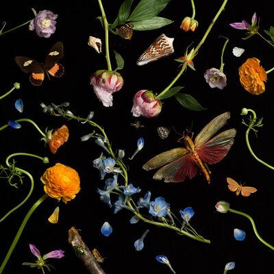 Paulette Tavormina, 'Botanical II (Ranunculus and Delphiniums)', 2013