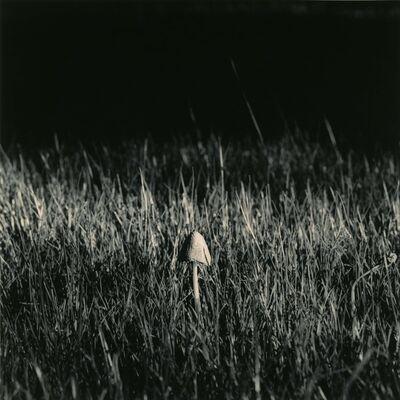 Ken Rosenthal, 'Terra Firma', 2010