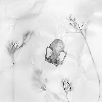 Rebecca Palmer, 'Among Poppies, from the series Meditations', 2012