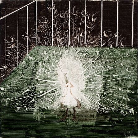 Xiao Zheluo 肖喆洛, 'Colorless Peacock', 2012