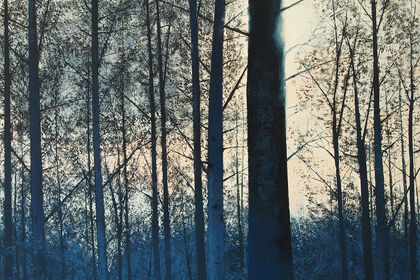 """Kind of blue""by Benoît Trimborn"