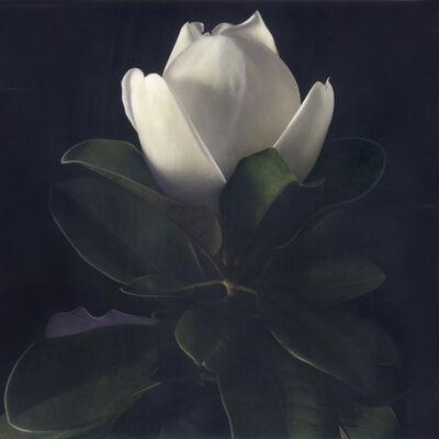 Brigitte Carnochan, 'Magnolia III', 2006