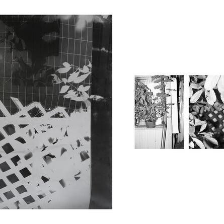 Bryan Graf, 'Shot/Reverse Shot, Studio Gardening at Night #4, July 26, 2020', 2020