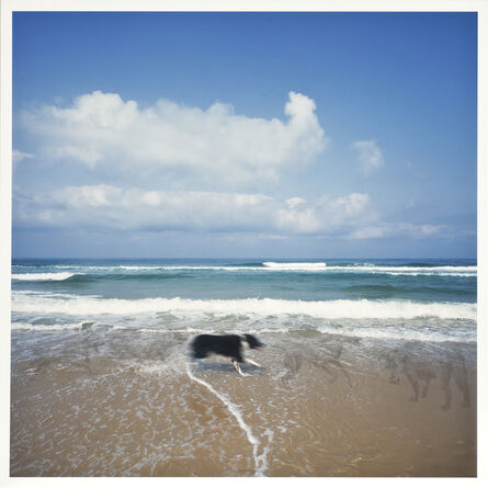 Naomi Leshem, 'Moryiama's Dog', 2015