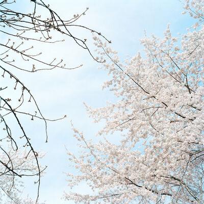 Sally Gall, 'Blossom #4', 2005