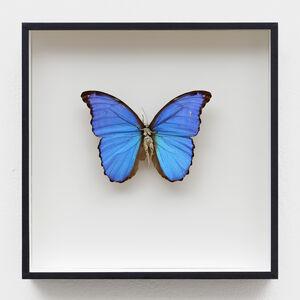 Lionel Sabatte, 'Réparation de papillon du 08 mai 2020', 2020