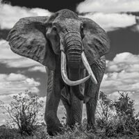 David Yarrow, 'Tsavo East', ca. 2017