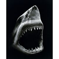 Robert Longo, 'Shark 5', 2008-2011