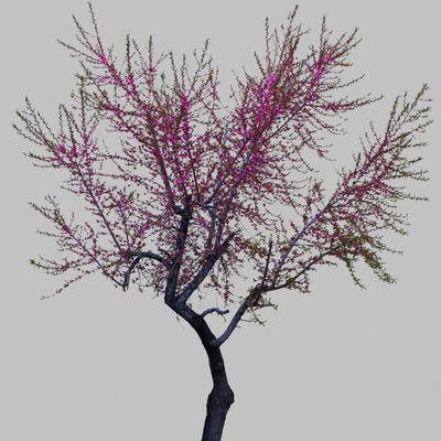Hiroshi Watanabe, 'TDTDC 39 (Purple Tree)', 2011