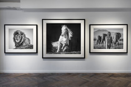 David Yarrow: World Renowned Fine Art Photographer