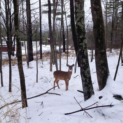 Rachel Papo, 'One Deer, Woodstock', 2013