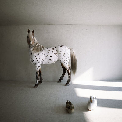 Kerem Ozan Bayraktar, 'A horse, a duck and a goose', 2013