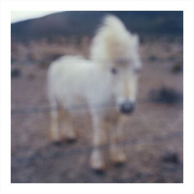 John Huggins, 'Miniature Horse, Oregon, ed. of 23', 2014