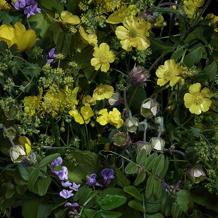 T.M. Glass, 'Buttercups and Other Wildflowers', 2019