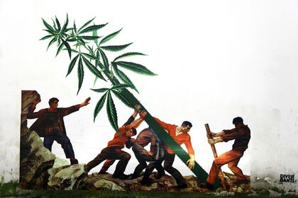 WEED NATION