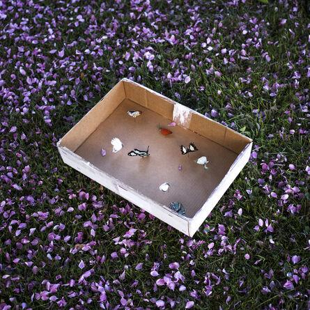 Cig Harvey, 'Seven Butterfly Specimens, Rockland, ME '