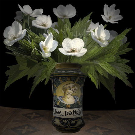 T.M. Glass, 'Anemone Canadensis in an Italian Pharmaceutical Vessel', 2017