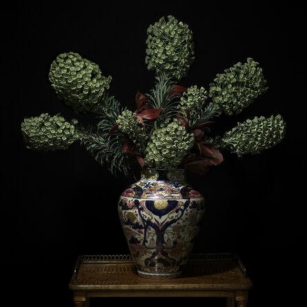 T.M. Glass, 'Euphorbia in a Japanese Imari Vessel', 2018