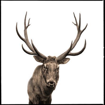 Nine Francois, 'Elk-II'