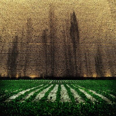 Mark Bartkiw, 'Rows', 2200