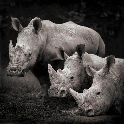 Nick Brandt, 'three Rhinos, Nakuru', 2007