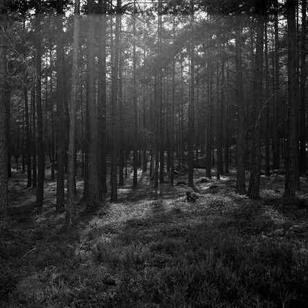 Astrid Kruse Jensen, 'The Forest', 2015