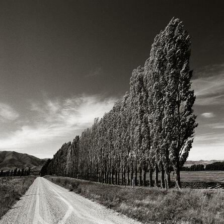 Chris Simpson, 'Poplars, South Island, New Zealand', 2003