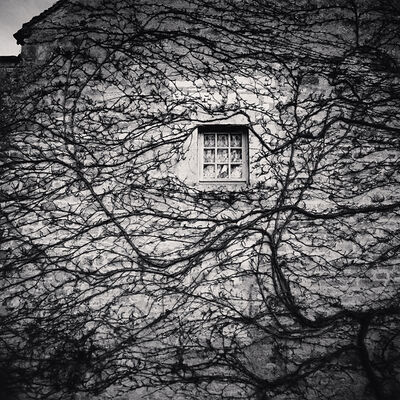Michael Kenna, 'Window and Vines, L'Abbaye de Fontenay, Bourgogne', 2013
