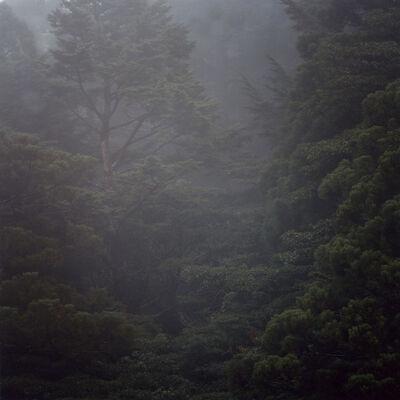 Daniel Gustav Cramer, 'Untitled (Woodland) #64', 2014