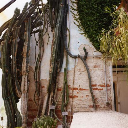 Dianne Bos, 'Padua Botanical #17', 2013