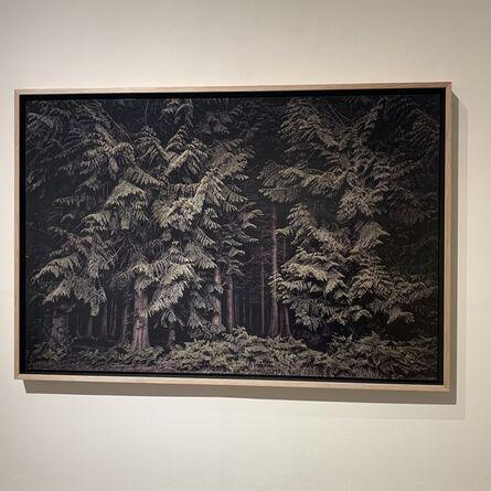 Jasper Goodall, 'Twilight's Path 001 - Cedars', 2019