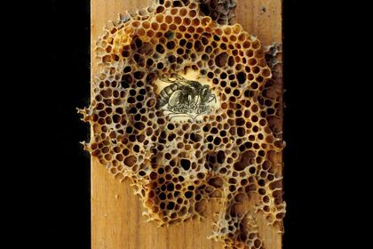 Plight of the Pollinators
