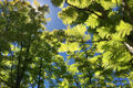 4,000 Redwood Trees Are Growing in Downtown Brooklyn
