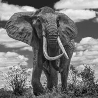 David Yarrow, 'Tsavo East', 2017