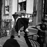 "Vivian Maier, '0131534 - New York, December 23, 1954, Self-Portrait Woman Tying Shoe, 12"" X 12""'"