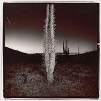 Richard Misrach, 'Plate 26 (boojum), from the Night Desert series', 1977