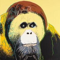 Andy Warhol, 'Orangutan (FS II.299)', 1983