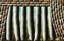 Mauer mit Aussicht