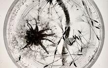 Jorge Mara - La Ruche at arteBA Special Edition